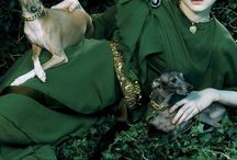 dogs in the fashion world / beautiful Scenes in Fashion with dogs