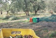 The new harvest 2014