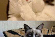 Grumpy Cat! / by Laura Smith