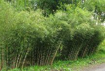 ogrod / rozplenica japonska proso ozdobne obiedka szerokolistna fargezja miskanty Trzęślica trzcinowata trawa pampasowa