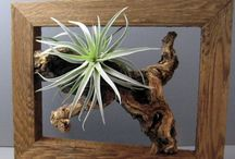 Air plant crafts