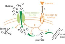 Metabolitos y metabolismo