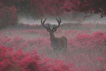 Deer's