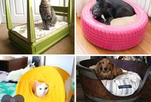 Pet DIY Ideas