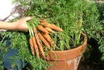 Zahrada zel/ovoc