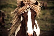 HORSES / I LOVE HORSES