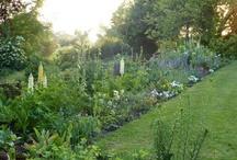 Garden / Garden ideas / by Sue Kourim