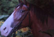 Kone / Kone