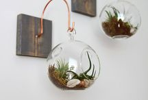 Terrariums / Create a little world within worlds....