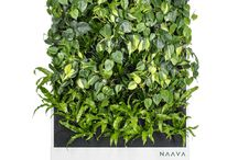 Naava smart green wall models and plants