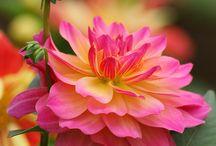 Hage / Blomster og tips til uteområdet