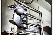 decorating with deer heads,  / by Sandy Taylor