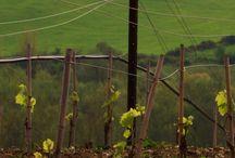Cantine Antinori Chianti Classico / Antinori Winery Chianti Classico
