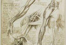 anatomy humans