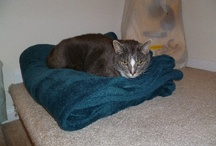 Storm / This is my cat - he has epilepsy and is struggling to lose weight... The meds makes him gain weight,