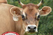 Herdshare information