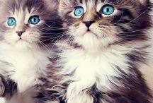 Kittens / Zo lief