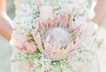 Protea and blushing brides Wedding flowers
