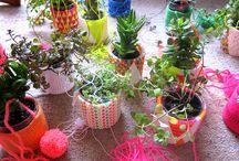 Plants! / House Plants!
