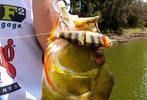 Savage Gear Catches / Savage Gear big fish catches