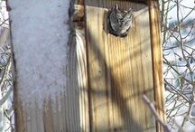 How To Make An Owl House