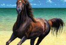 lovak :3