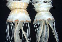 Jellyfisch
