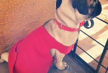 Lilo the PUG / This is my beautiful dog name is lilo
