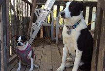 SLC Dog Sitter Reviews