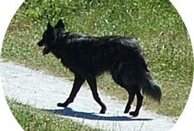 In het wild / Foto's van in Kloosterveen gespotte dieren.