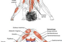Yoga anatomy / Yoga