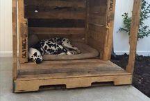 Homeless Dog House