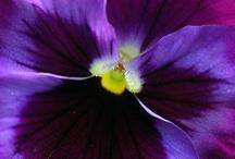 꽃사진 만들기