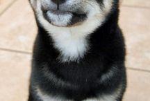 My pet <3