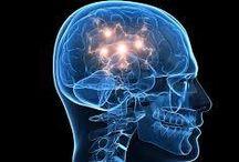 Ventre cerveau