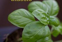Gardening, herbs and seeds, etc. / Gardening ideas, nutrition