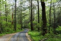 Roaring Fork Motor Trail Gatlinburg