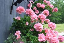 plantas para mi jardin