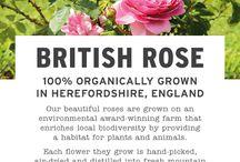 Bloomin' Marvellous BRITISH ROSE