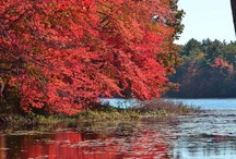 Seasons / by Doris Cortez