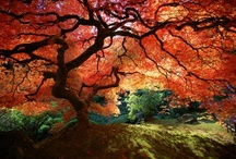 Garden / by Saundra Steelstone