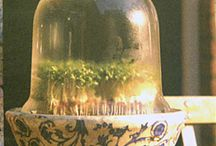 Cloches and Terraniums