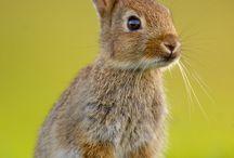 Högtid - påsk kanin