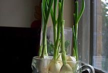 10 veg to regrow