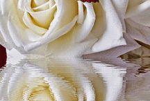 Gif flores cartelitos y más