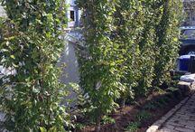 Good Gardens client work