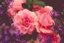 Flowers ^-^
