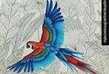 Millie M. Beautiful Birds & Treetop Treasures