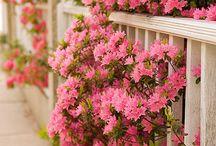 Çiçek / İlğinç ve orjinal çiçekler