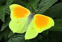 Vlinders en andere mooie dieren